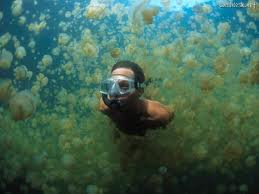 Jelly fish lake. I want to swim here... seriously.scubawarehouse.com.sg