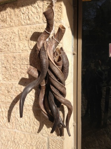 Ram's horns for Shofars, hanging outside a shop in Jerusalem