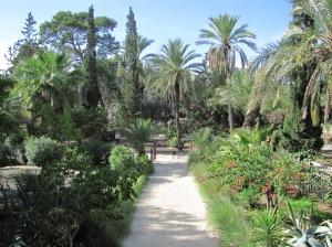 Beautiful Scenery at Capernaum