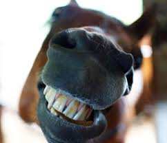 I'm looking this gift horse in the mouth. Image: factfixx.com